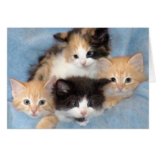 Orange, Kaliko und schwarze/weiße Kätzchen-Karten Karte