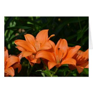 Orange Lilly Blumen Karte