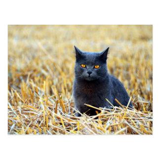 Orange-Mit Augen schwarze Katze auf dem Gebiet Postkarte
