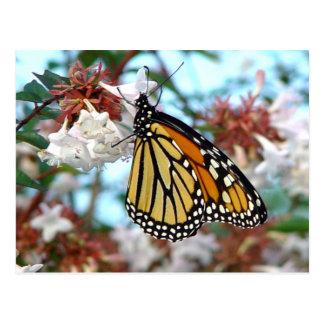 Orange Monarchfalter-Postkarte Postkarte