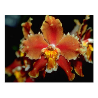 Orange Oncidium Blumen Postkarte