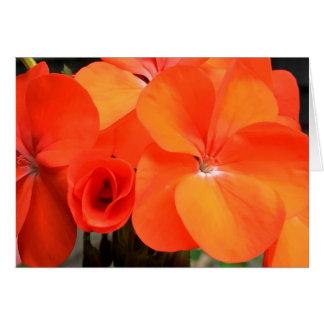 Orange Pelargonie-Blumen-Foto-Karte Karte