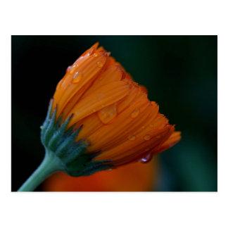 orange Ringelblume Postkarte