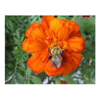 Orange Ringelblumen-Bienen-Blume Postkarte