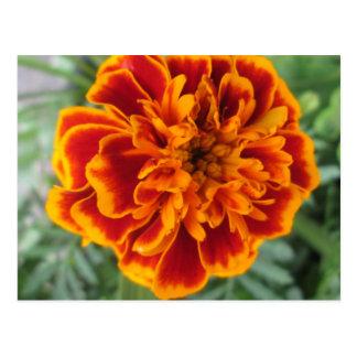 Orange Ringelblumen-Blume Postkarte