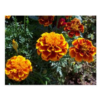 Orange Ringelblumen Postkarte