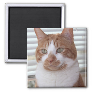 ORANGE TABBYcat-MAGNET Quadratischer Magnet
