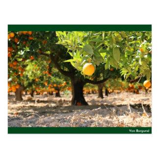 Orange Trees - Postkarte