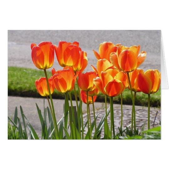 Orange Tulpen Grußkarte