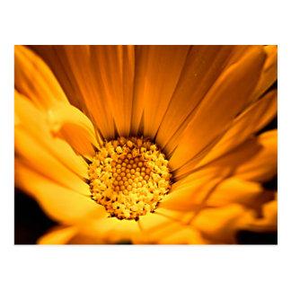Orange und gelbes Gerberagänseblümchen Postkarte