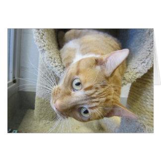 Orange und weiße Tabby-Katze Karte