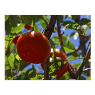 Orangen-Obstbäume Postkarte