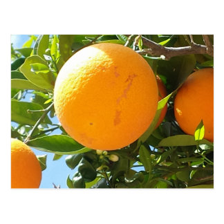 Orangenbaum - Spanien, Postkarte