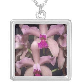 Orchidee, (Cattleya amethystoglossa), Ost Versilberte Kette