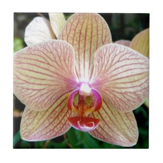 Orchidee Kleine Quadratische Fliese