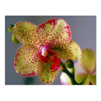 Orchidee Postkarte