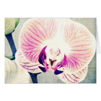 Orchideen-Farben Karte