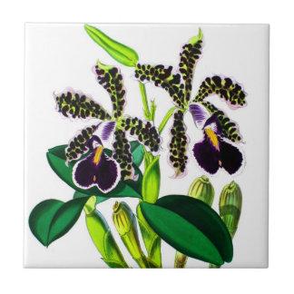 Orchideen Fliese