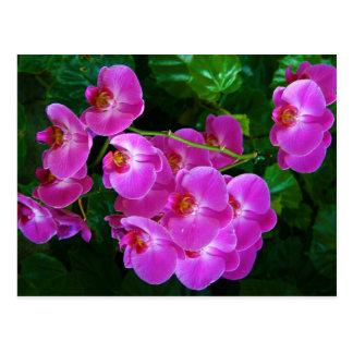 Orchideen Postkarte