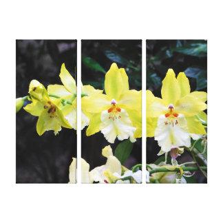Orchideen-Trio eingewickelter Leinwand-Druck Leinwanddruck
