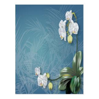 Orchideen u. Farne Postkarte