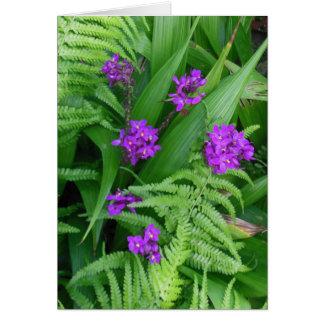 Orchideen und Farne Karte