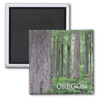 Oregon-WaldFoto Quadratischer Magnet
