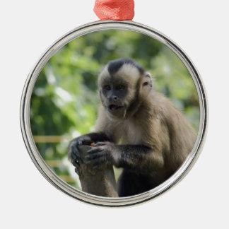 Ornement espiègle de singe