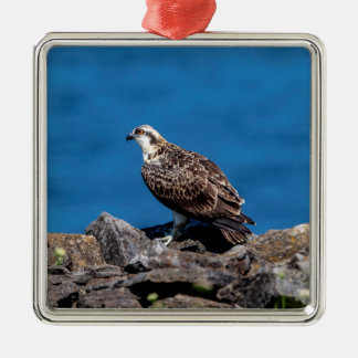 Osprey auf den Felsen Silbernes Ornament