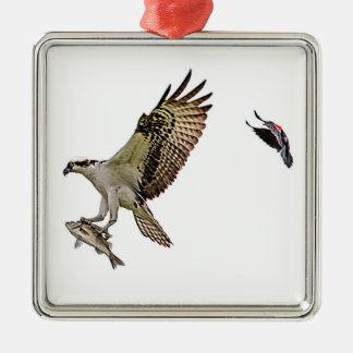 Osprey, der durch eine rotgeflügelte Amsel gejagt Quadratisches Silberfarbenes Ornament