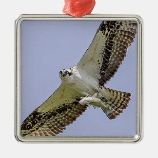 Osprey mit einem Fisch Silbernes Ornament