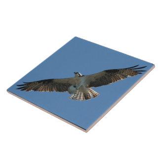 Osprey-Raubvogel-Vogel-Tier-Tier-Sumpfgebiete Keramikfliese