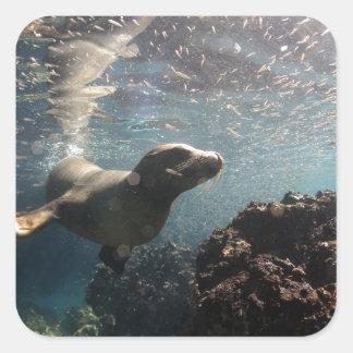 Otarie sous l'eau espiègle et curieuse sticker carré