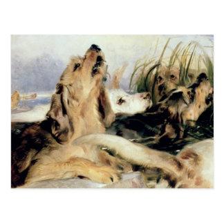 Otter-Jagdhunde Postkarte