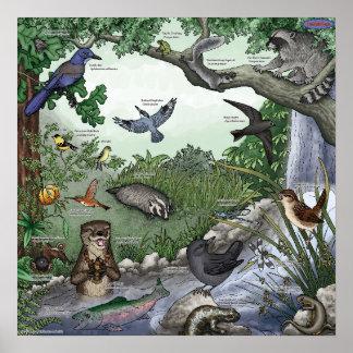 Otter-magisches Doppelplakat Poster