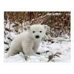 Ours blanc de bébé carte postale