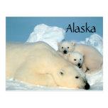 Ours blanc de l'Alaska avec la carte postale de pe