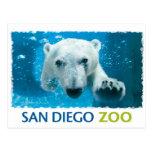 Ours blanc de zoo de San Diego Cartes Postales