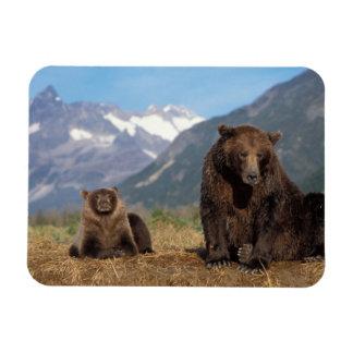 Ours de Brown, ours gris, truie avec l'petit anima Magnets En Rectangle