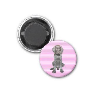 Ours gris brillant dans le rose magnets