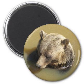 Ours gris aimants pour réfrigérateur