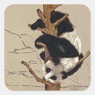 Ours panda espiègle de faune d'autocollant vers le sticker carré