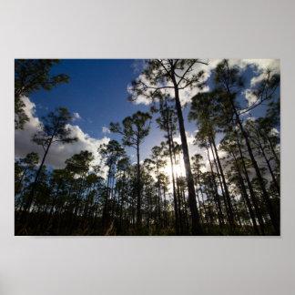 Oxbow Öko-Mitte Bäume, Fort Pierce, Florida Poster