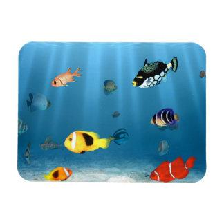 Ozeane der Fische Magnet