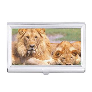 Paare der afrikanischen Löwen, Panthera Löwe, Visitenkarten Etui