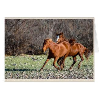 Paare der wilden Pferde Grußkarte