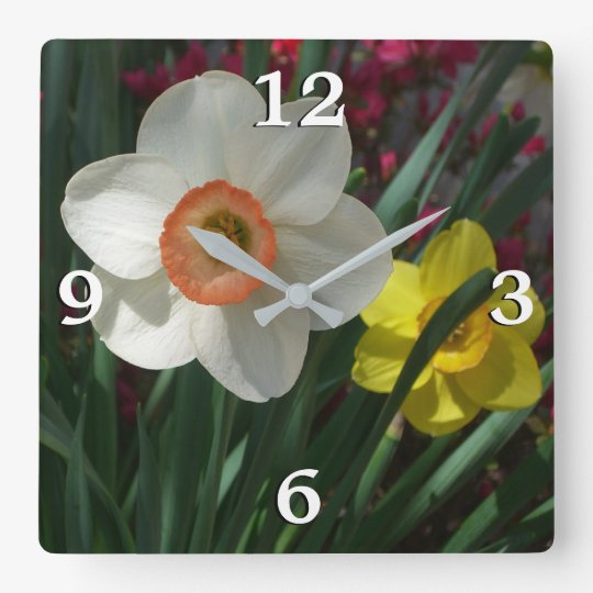 Paare Narzissen rosa und gelbe Frühlings-Blumen Quadratische Wanduhr