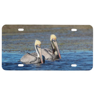 Paare Pelikane US Nummernschild