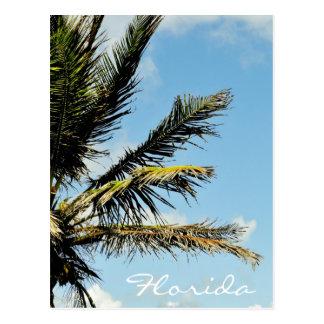 Palme agaist der Himmel in Florida Postkarte