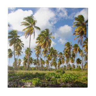 Palmen auf dem Strand von Isla Saona Keramikfliese